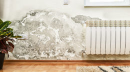 43563629 - damage caused by damp on a wall in modern house